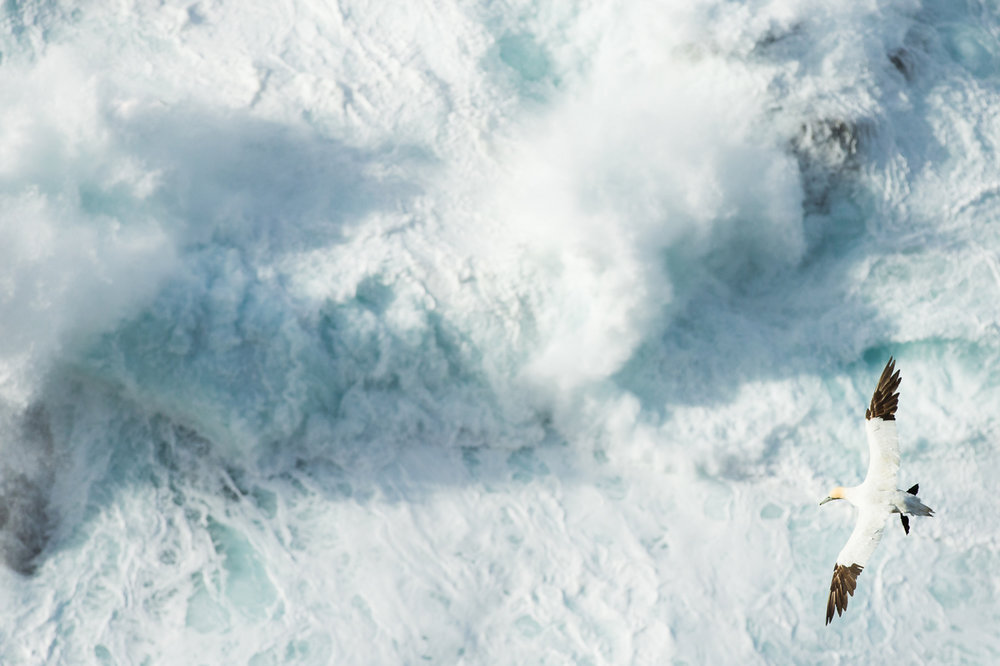 Over Stormy Seas Highly Commended | Nature Image Awards 2015|Buy Print
