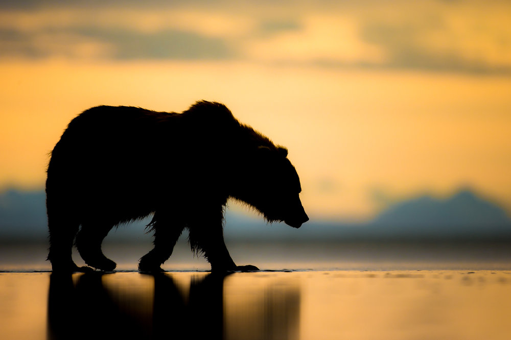 Sunset Stroll Highly Commended | Nature Image Awards 2017 |Buy Print