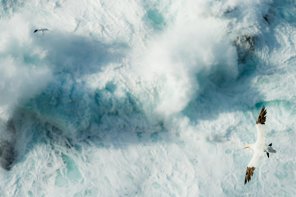 Over Stormy Seas  | Highly Commended | Nature Image Awards 2017