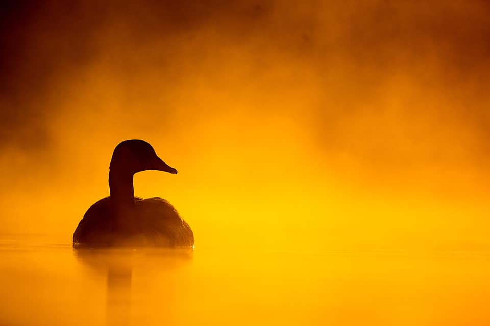 Dawn Of A New Day  | Commended | Bird Photographer Of The Year 2018