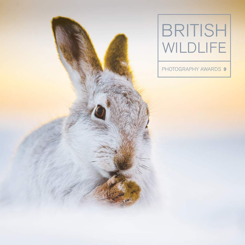 Sunset Hare  | Book Front Cover Image | British Wildlife Photography Awards 2018