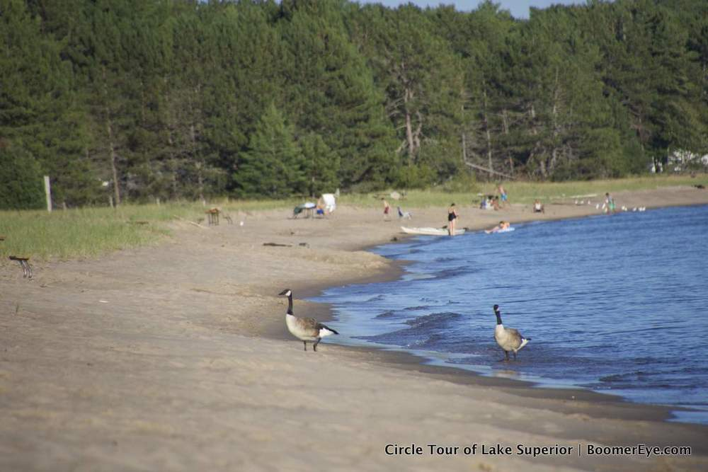 How would we know it's Canada if Canadian geese didn't show up?