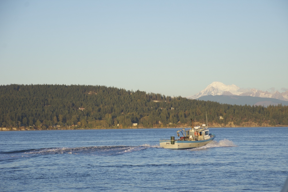 Guemes Island ahead, this image was taken from the Guemes Island Ferry. A crab boat heads towards Mt. Baker in the distance. How captivating is this?