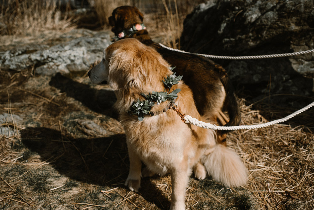 Emma and Jeddah - Intimate Luray Wedding - Shenandoah National Park Wedding - Adventure Elopement in Virginia - Shenandoah National Park Elopement_30.jpg