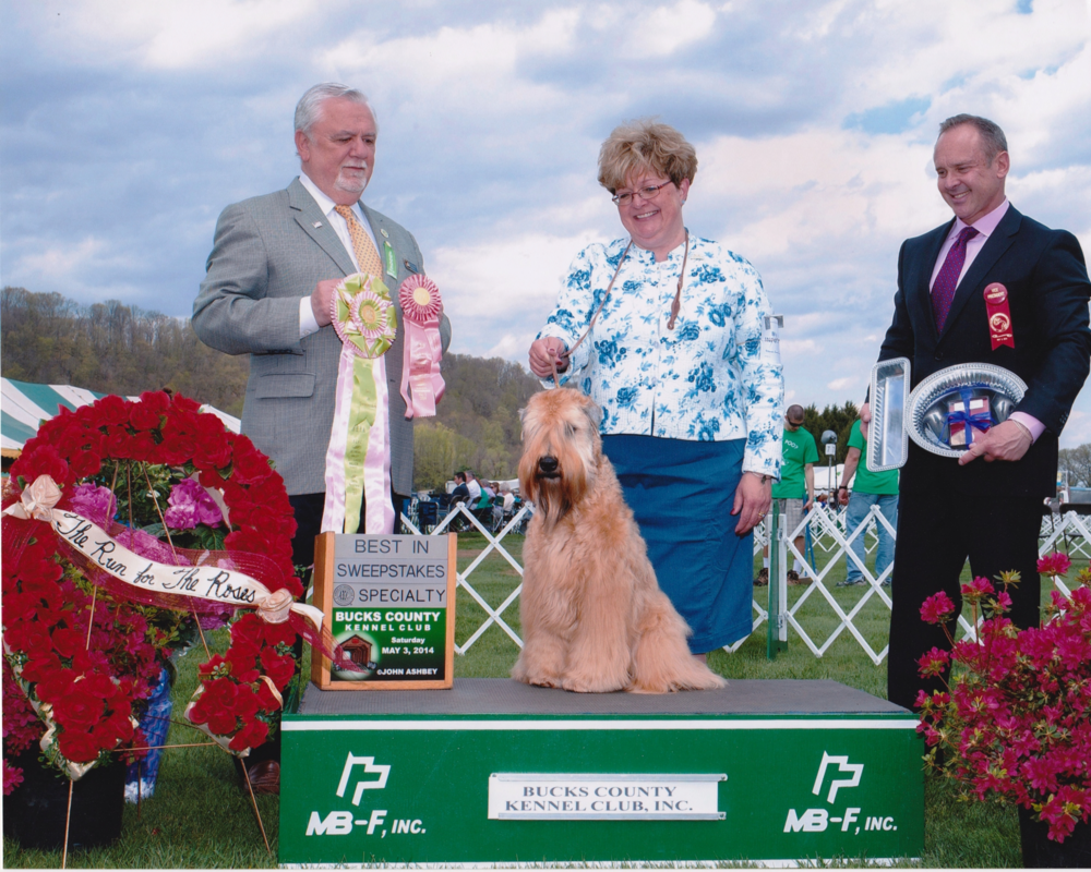 Zoey winning Sweepstakes, DVSCWTC, May 2014