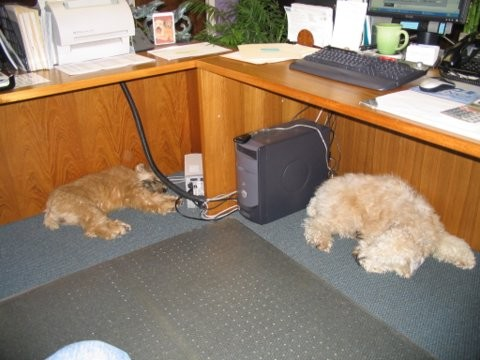 Addie and Lula working 02_05.jpg