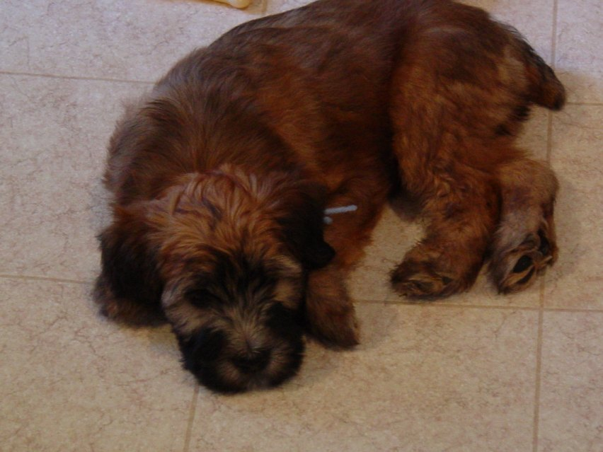 Flash puppy.jpg