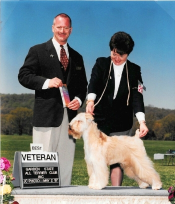 Farley, returning to the show ring at age 11 1/2.