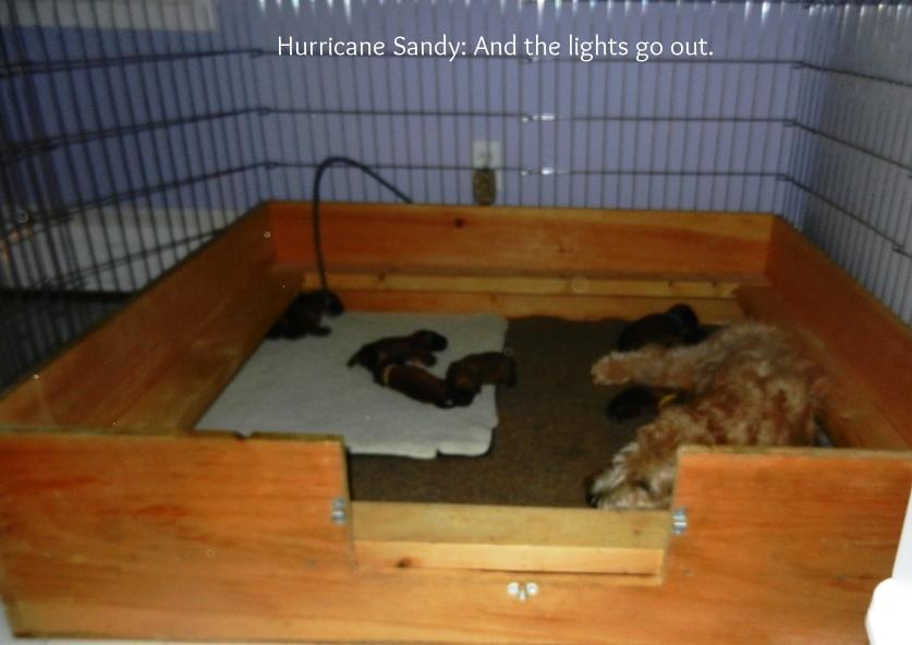 The_storm_arrives_10-29-12_-_01.jpg
