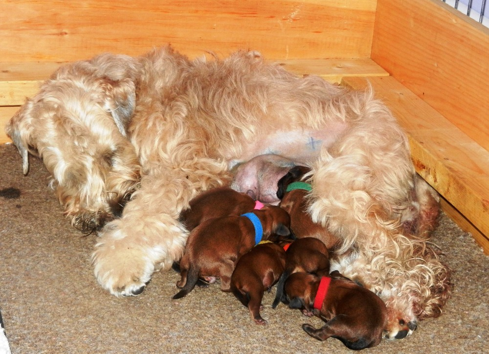 Pinch & puppies...Day One