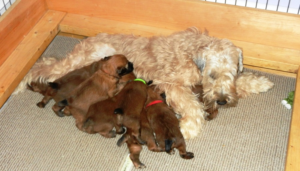 At age 3 1/2 weeks, it's getting crowded at the milk bar!