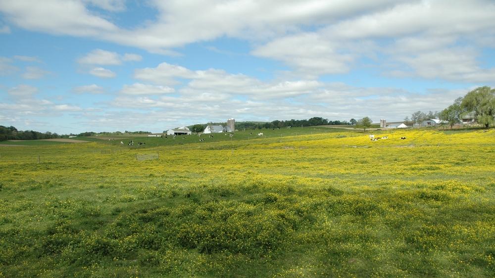 20060522_Farmland_036.JPG