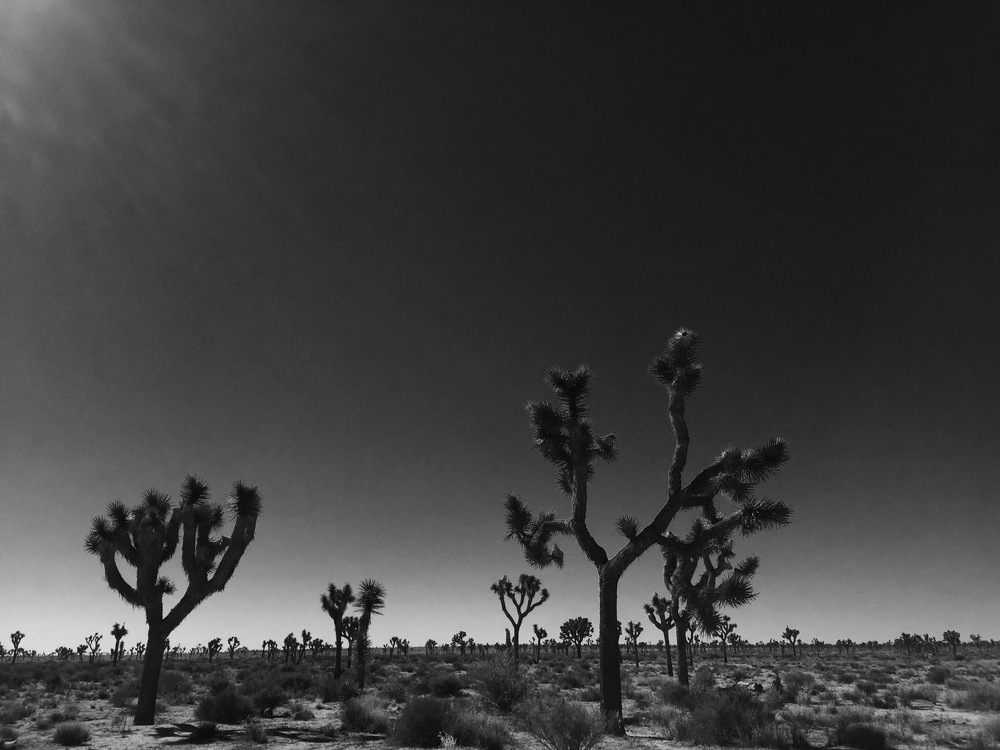 Stillness in Joshua Tree National Park