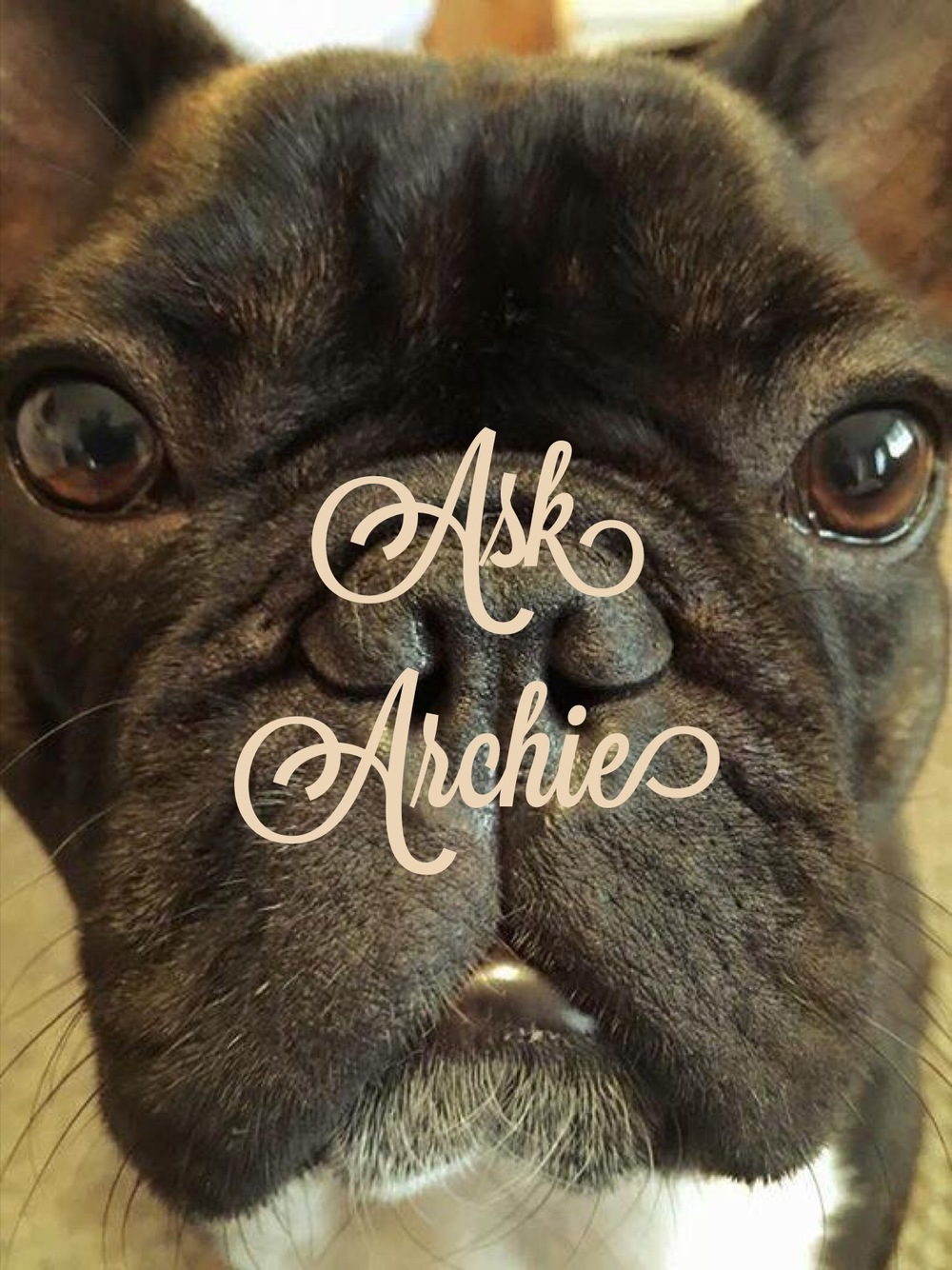 Ask Archie Cover