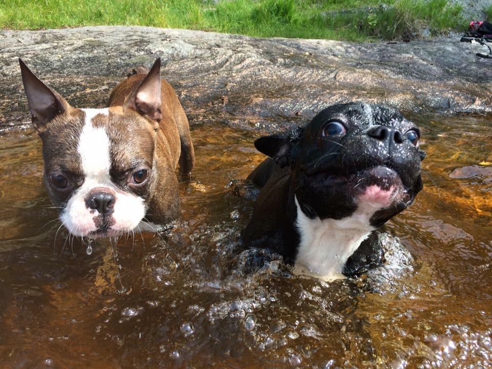 It is Bob plus Bubbles doing wet, watery goofballery, guys!! :)