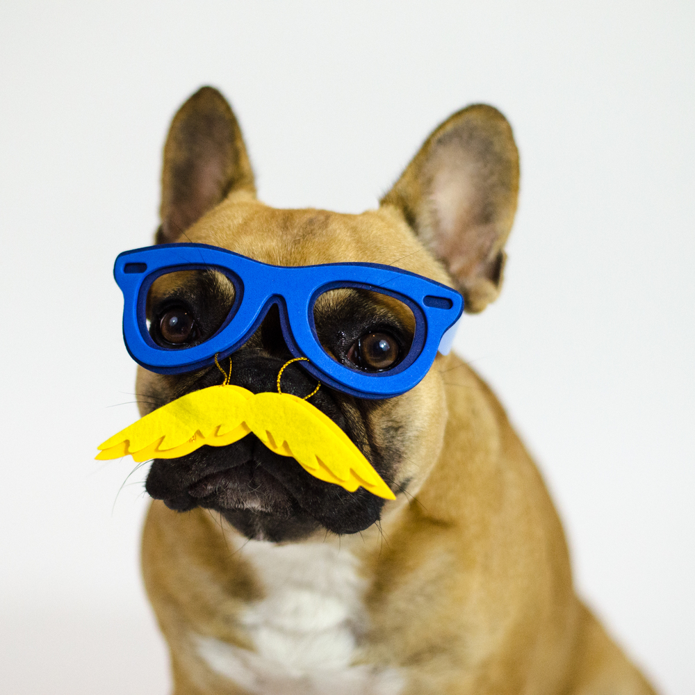 OK, everybuddy!! I MUSTACHE YOU A QUESTIONTHOUGHT!!?? Ha ha!! Did you like this picturestory of my MIrabelle in her soopersecretagentman disguise!!?? I know I sure did!! Shanksh, everybuddy!!❤❤❤