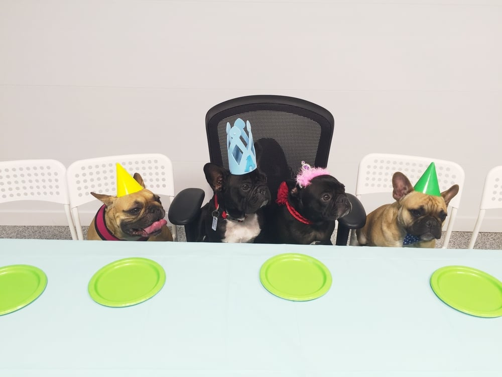 """We tried all kindsa differenter poserational ways even!!    """"LEFT PAW SIDE, GUYS!! NICE!!"""" ............"""