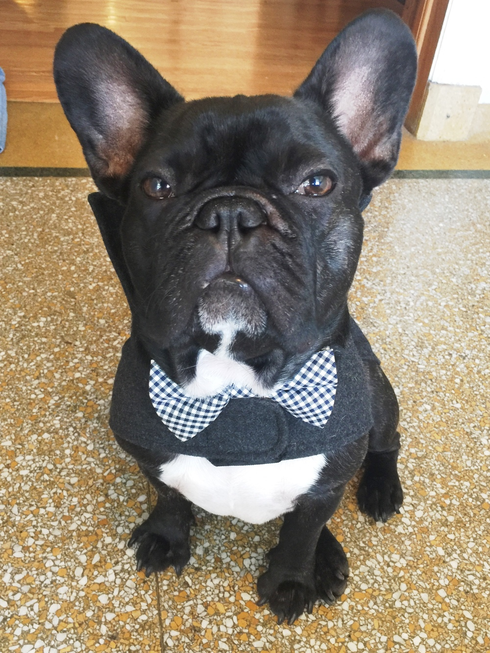 So in the morningtimes, to get all ready to go and stuff, I put on my handsome-ist bowtie plus my gentleman cozycoat!! Yup!! Pretty snazzy, amirite!!?? .................