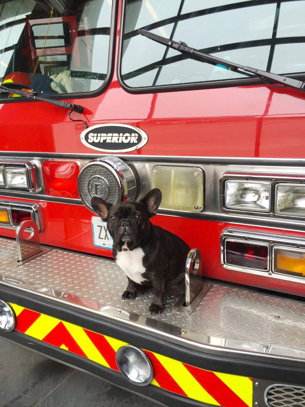 FIRE SAFETY DOG, ME!!