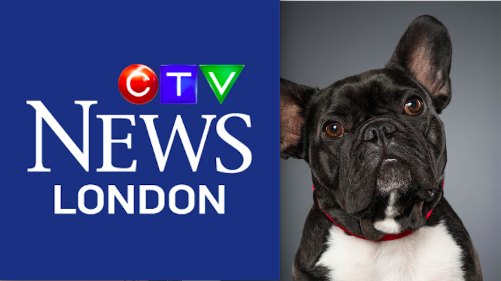 To watch the CTV News segment on Archie, click the photo