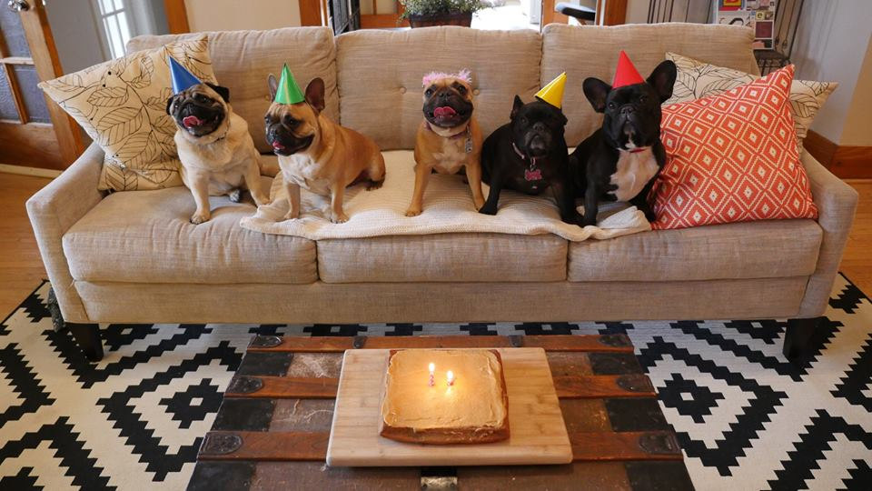 (l to r) ANDY the PUG, MARCEL the BOY, MIRABELLE, COUSIN ELLIE, plus ME, ARCHIE BRINDLETON!!