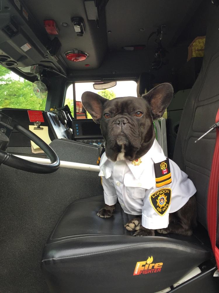 Fire Safety Dog Archie Brindleton