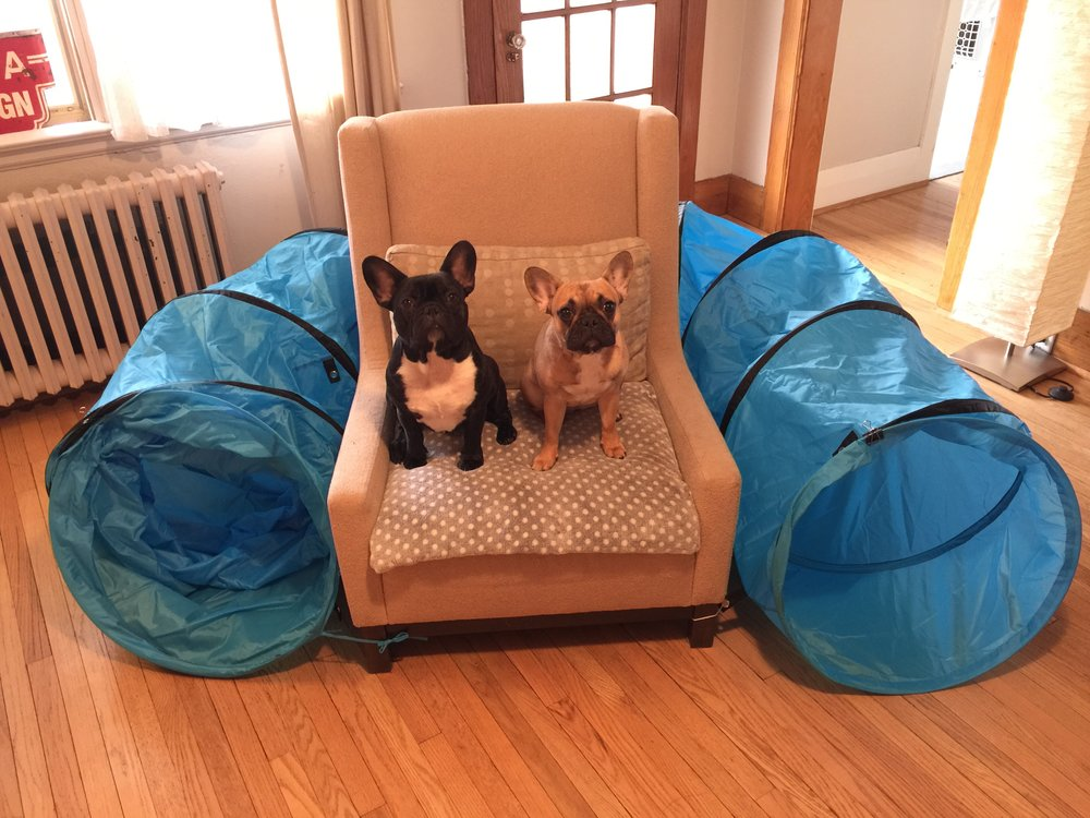 When Mirabelle was just teensy, Mum plus Pop gave us this BLOO funnelfort for doing goofballery in!! 'Cept that Mirabelle does not like to go innit!! Not even littlebits!! Ha ha!!