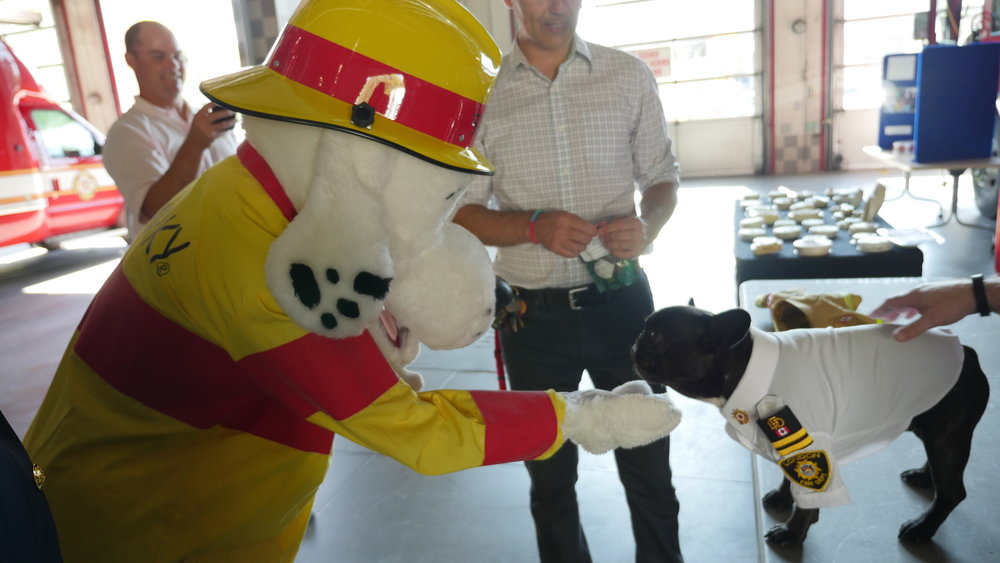 Archie meets worldfamous Fire Safety Dog, SPARKY!!