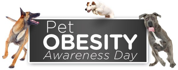 Click for more informational wordybits 'bout PET OBESITY AWARENESS DAY!!