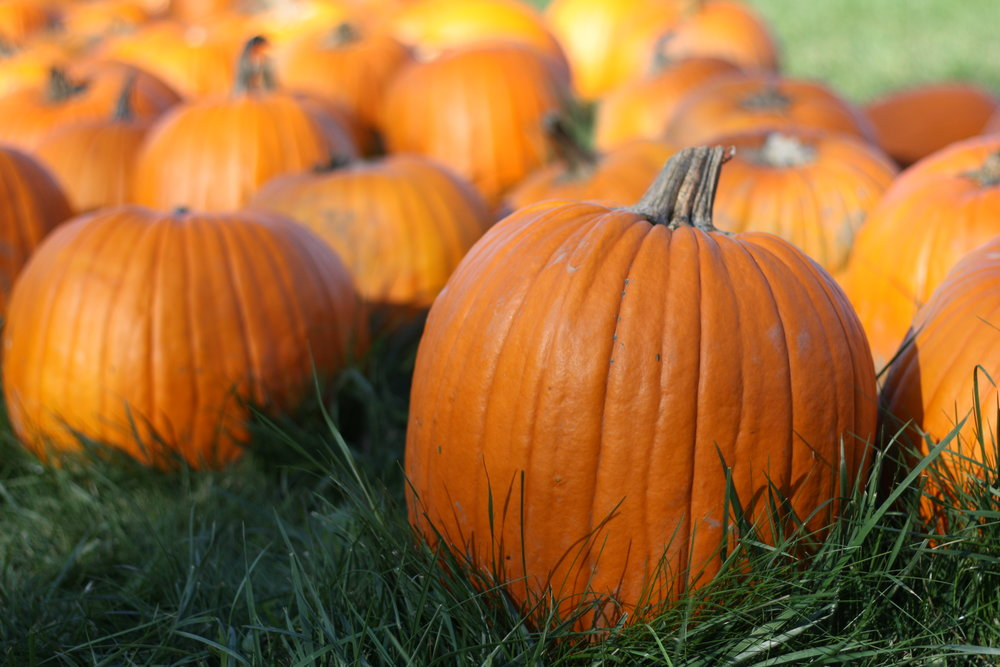 Click the photo to visit the PUMKIN DAY page on DaysOfTheYear.com!