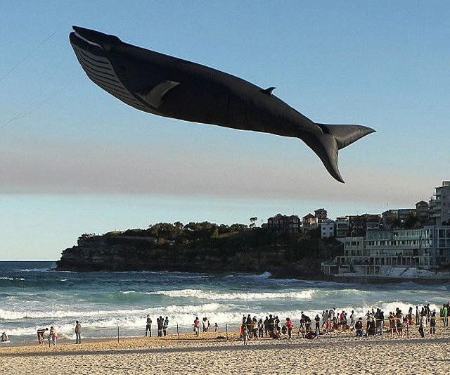 lifesize-blue-whale-kite-4965.jpg