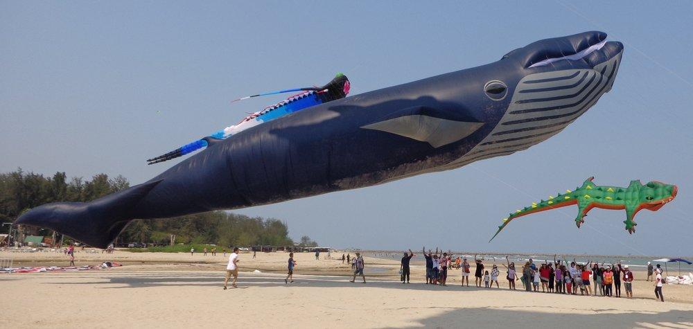 30-meter-Blue-Whale-in-Thailand.jpg