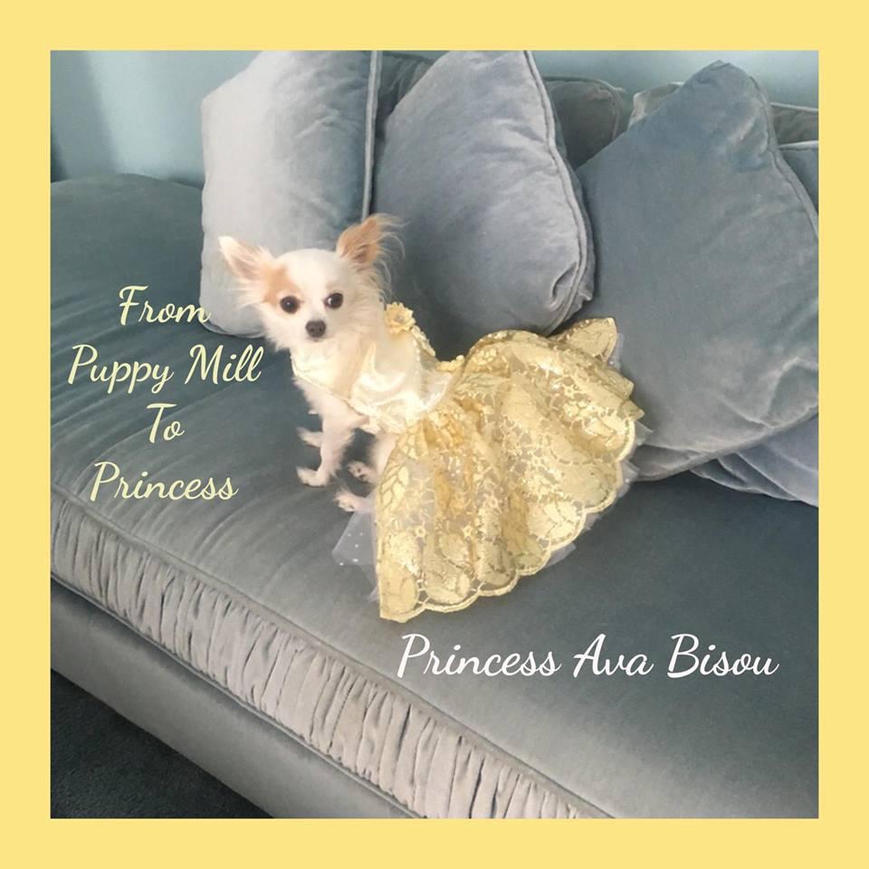 clicky-click on Princess Ava to visit her FayBo page, guys!!