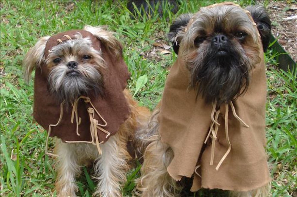 dog_costumes_star_wars_day1.jpg