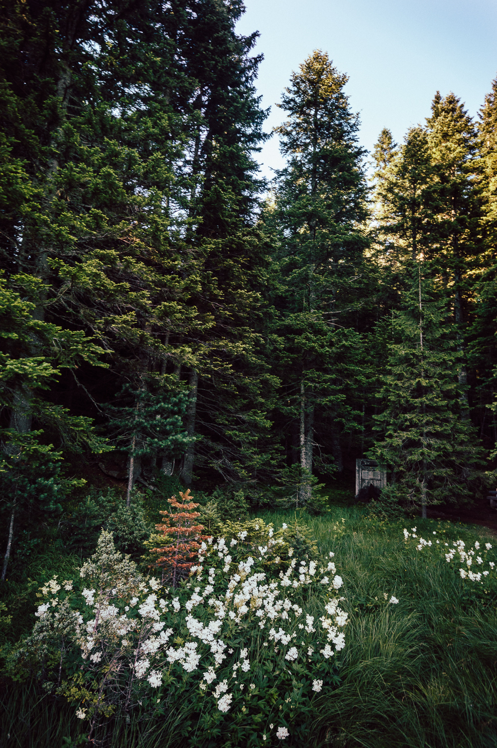 Forest Flowers Limited Edition / $40.00 / Durmitor, Montenegro / 0 of 3 sold