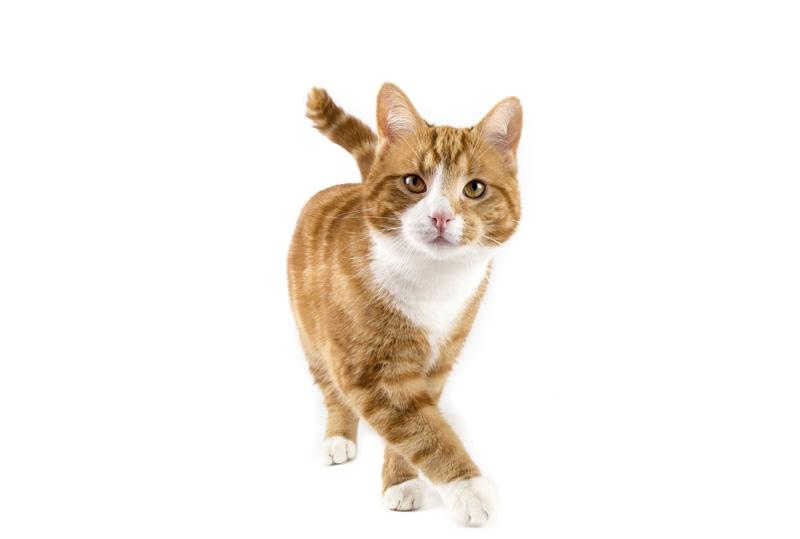 HP-Cat.jpg