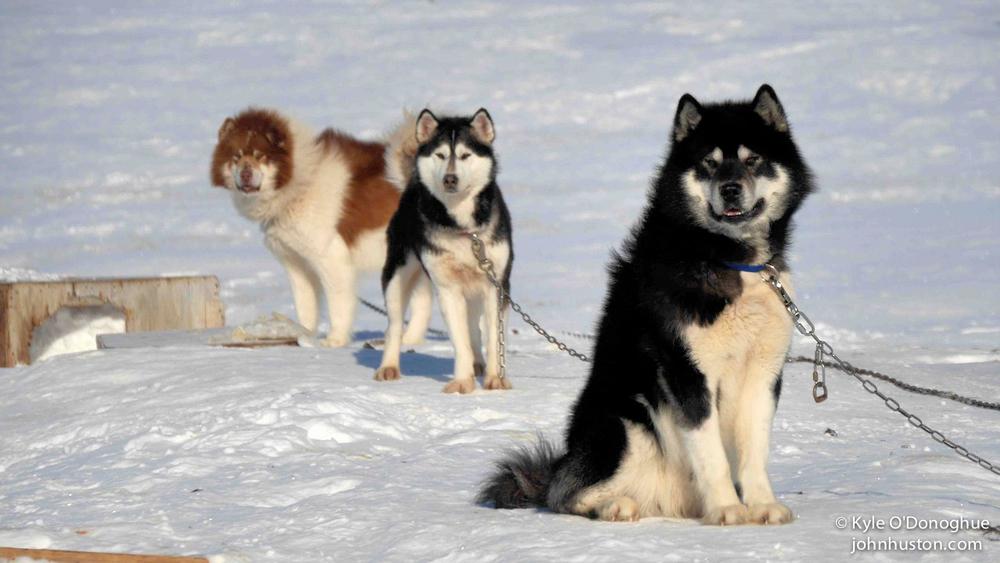 Axel, Elle, & Napu