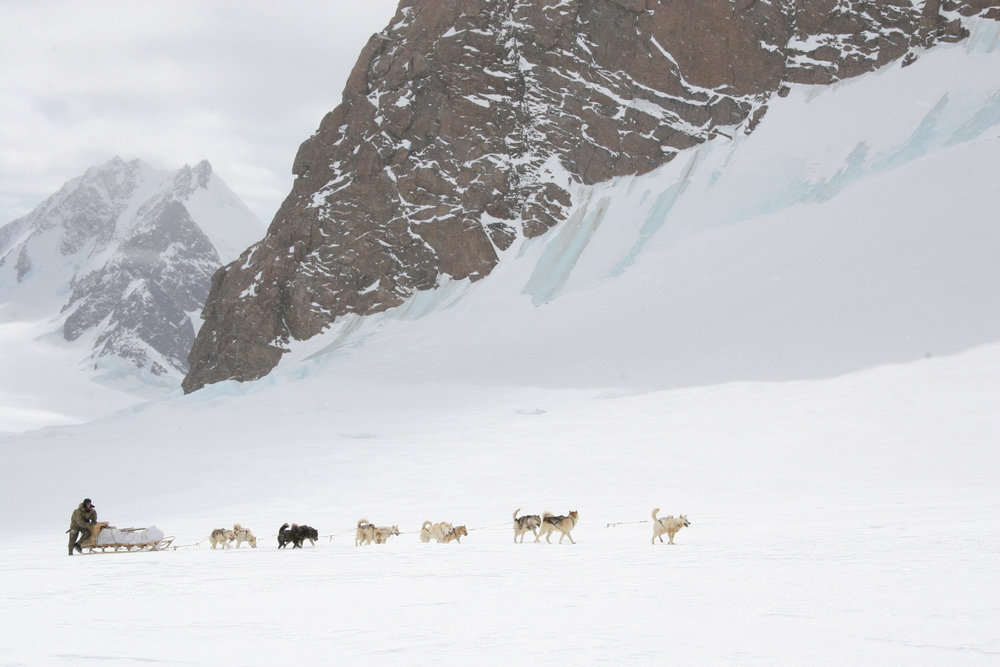 John Huston and his dog team head up a glacier in the Mount Forel range in southeast Greenland. The expedition restaged the Norwegian Roald Amundsen's 1911 expedition to the South Pole and used all 1911-style food, clothing, and equipment. © Keo Films/BBC