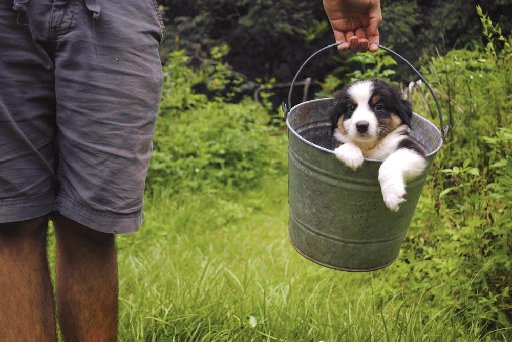 David-Pup-2.jpg