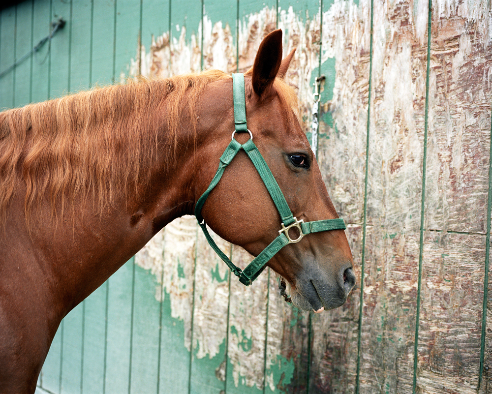 HorseandWall2.jpg