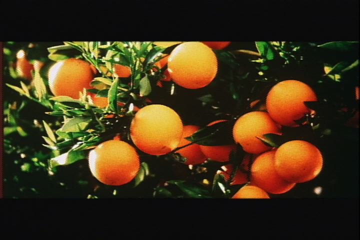 Bunch of oranges.jpg