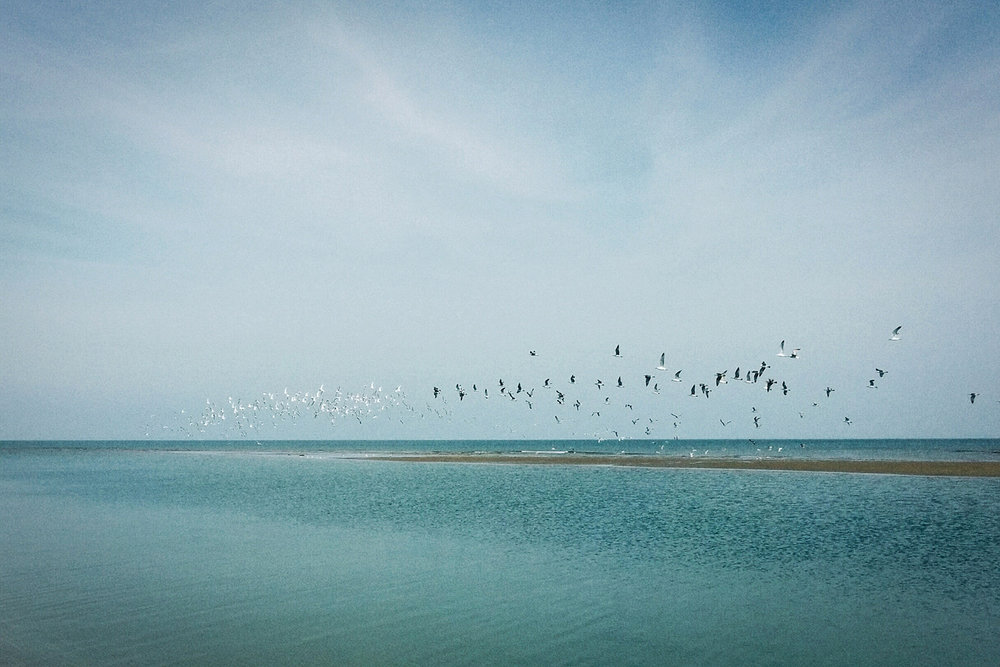 Flying birds over the sea