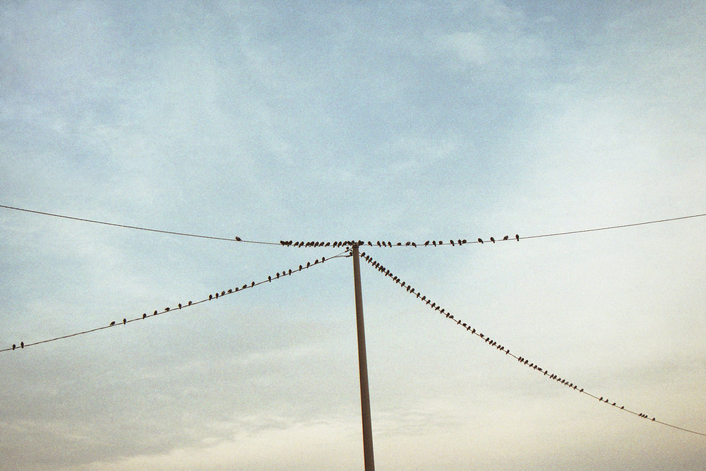 Birds on the wire at sunset