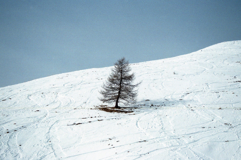 Solitary tree in the snow
