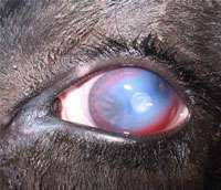 Pinkeye | Prevent, Identify + Treat -