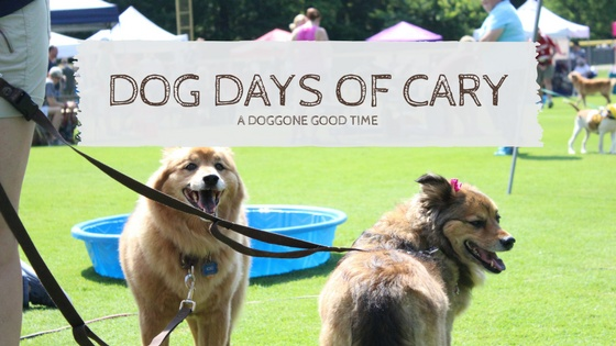 Dog-Days-FB-event-header.jpg