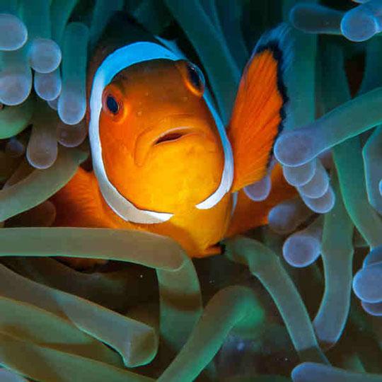 As the sea anenome protects Nemo here, your HOA protects its members from unbridled neighbor weirdness!