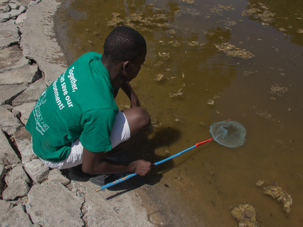 Students fish insects out of a pond to learn about the water's evosystem