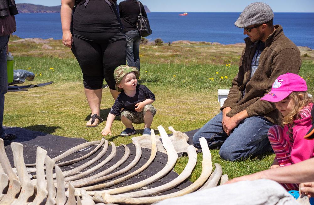 Whale Day-5.jpg
