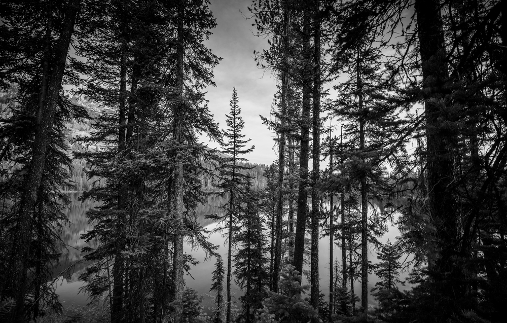 through trees B&W (1 of 1).jpg